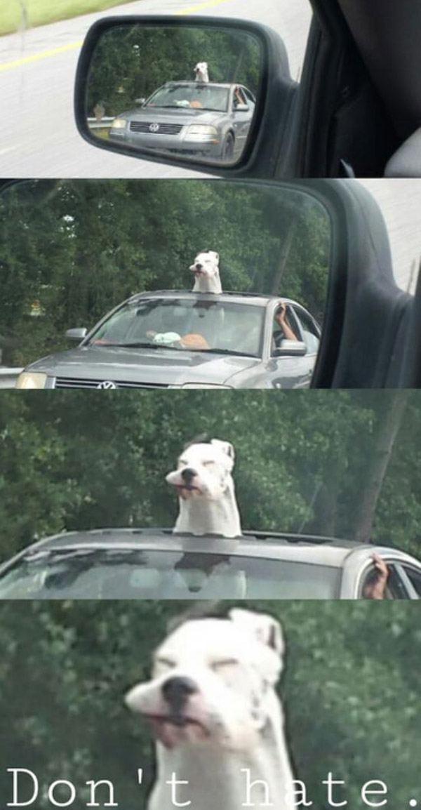 Sunroof Dog