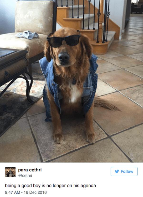 Bad Boy Dog