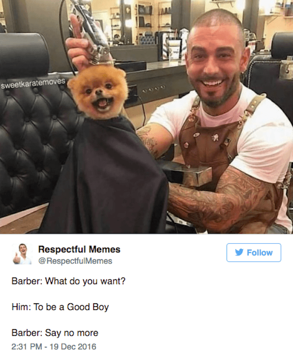 Barbershop Hilarious Doggos