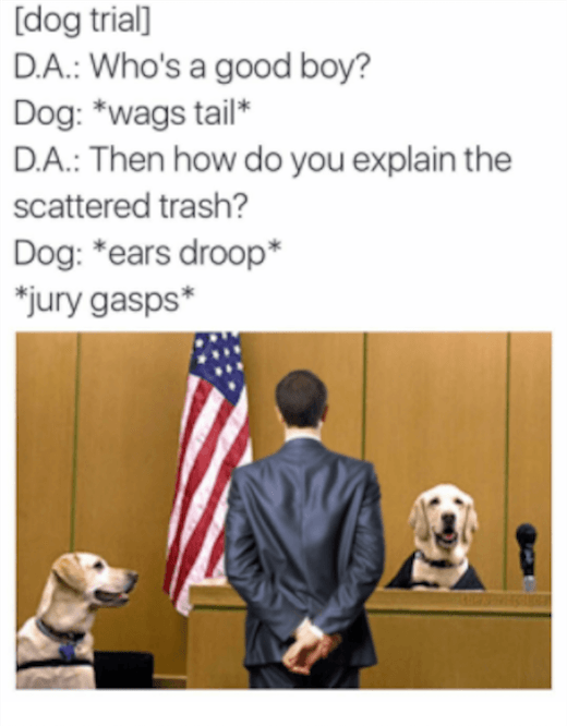 Court Funny Doggos