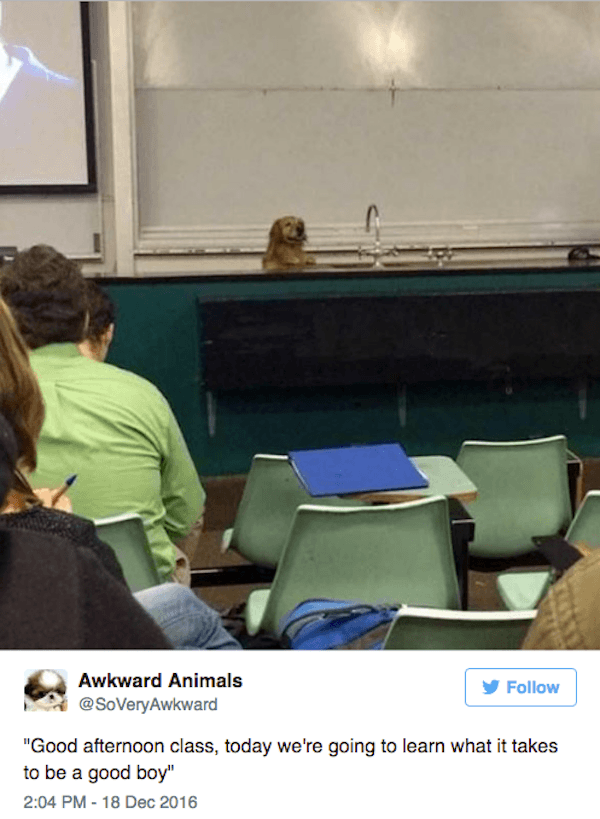 Good Boy Class