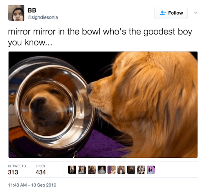 Good Boy Doggo In The Mirror