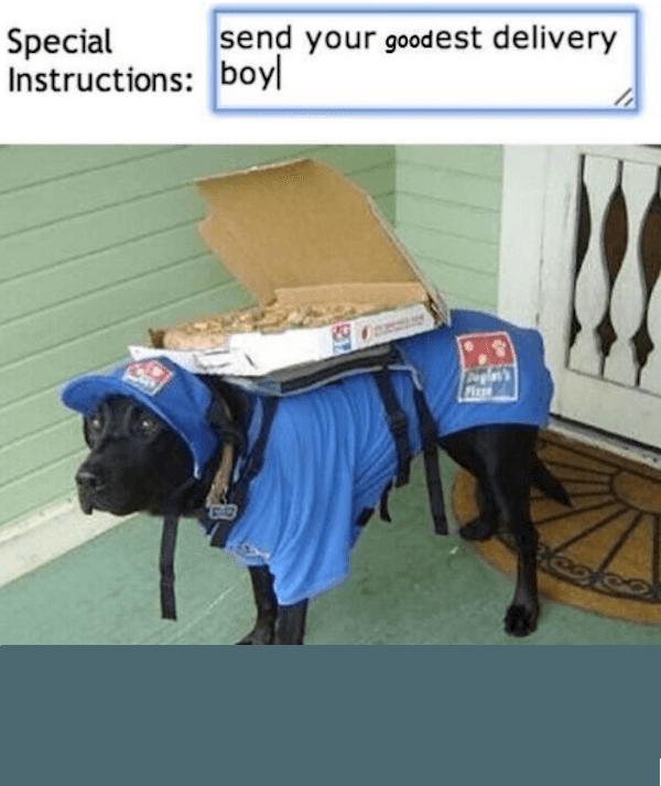 Good Boy Dog Memes