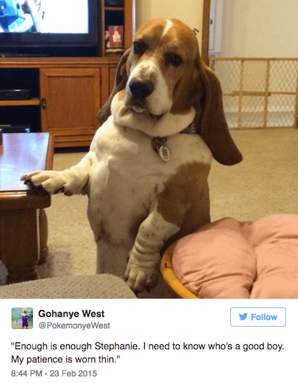 Stephanie The Doggo