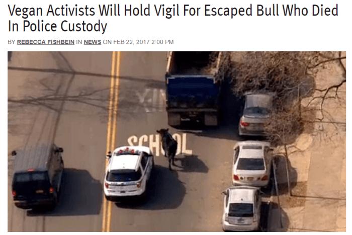 Vegan Activists