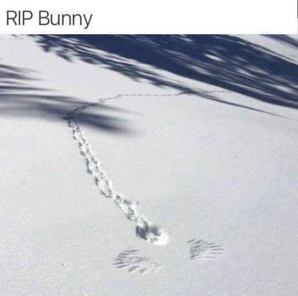 Bunny Rip