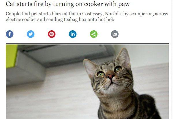 Cat Starts Fire