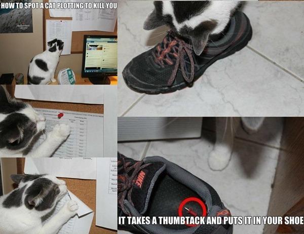 Cat Tack Shoe