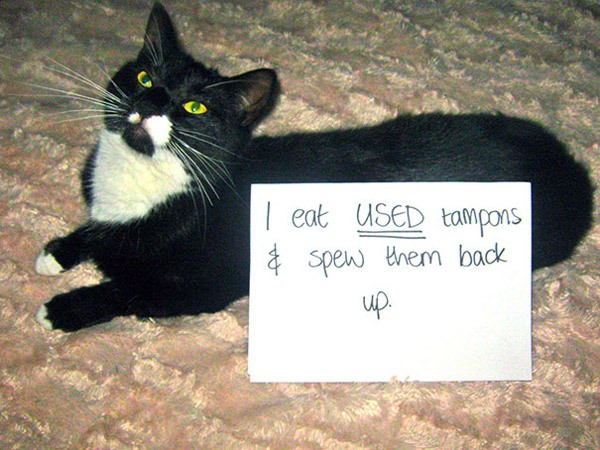 Cat Tampon Eater
