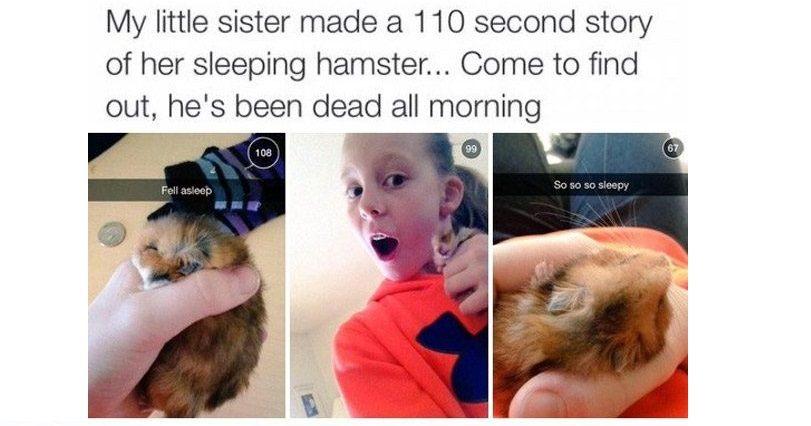 Dead Hamster