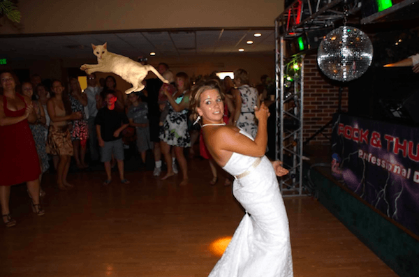 Funny Pictures Of Brides Throwing Cats