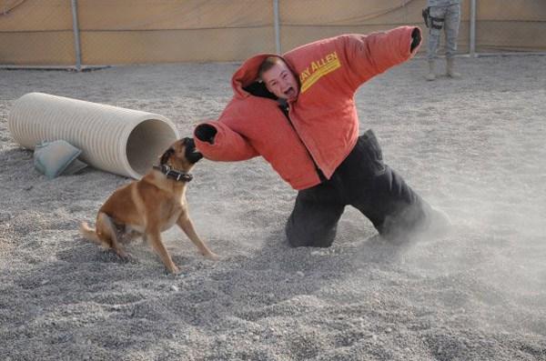 Dog Kid Takedown