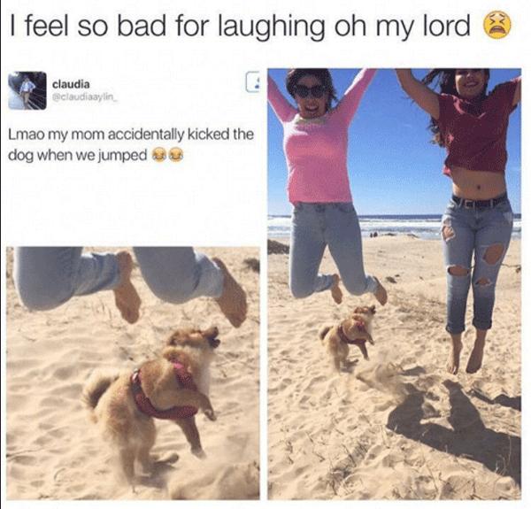 Dog Photo Gone Wrong