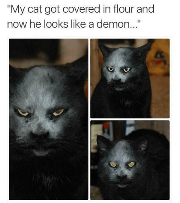 Flour Demon Cats Are Jerks