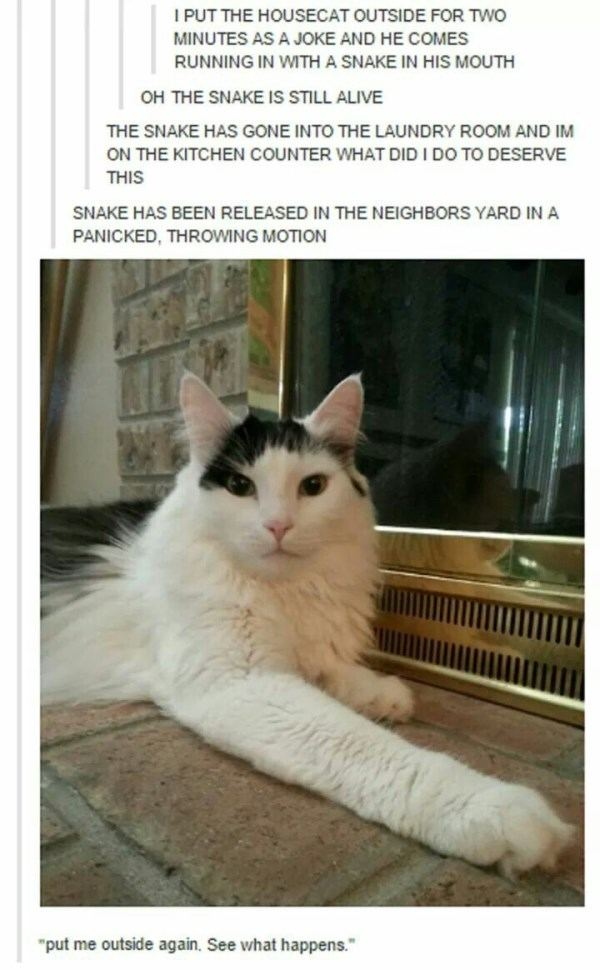 Funny Cats That Are Jerks