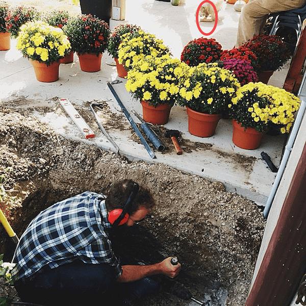 Gardening Edit