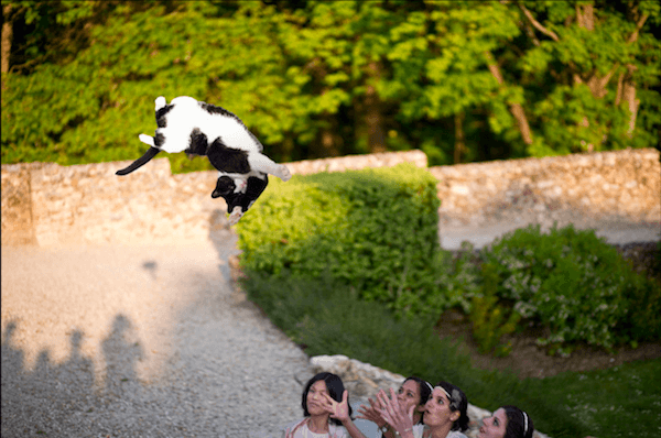 Funny Photoshops Of Brides Throwing Cats