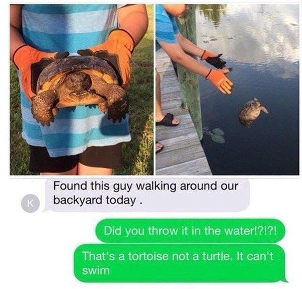No Swim Tortoise