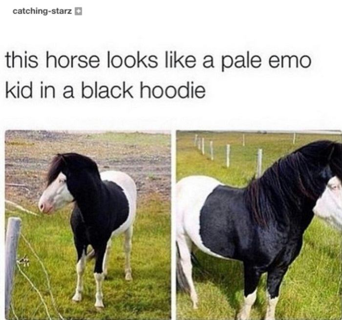 Pale Emo Horse