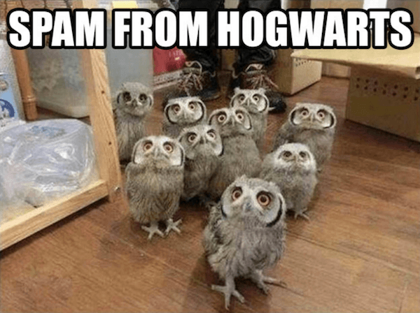 Funniest Harry Potter Memes
