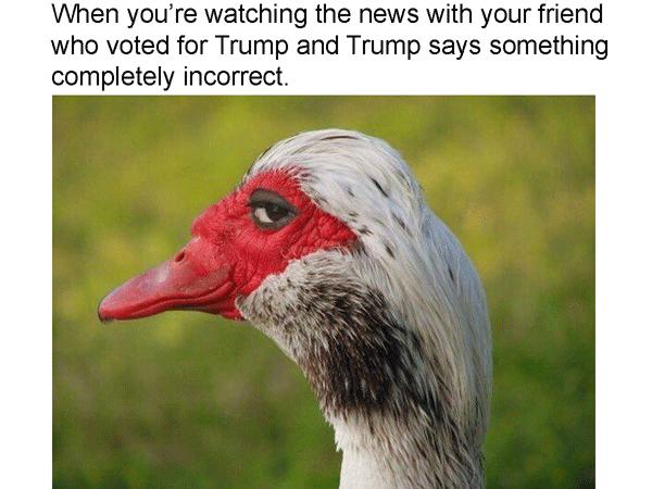 Trump News