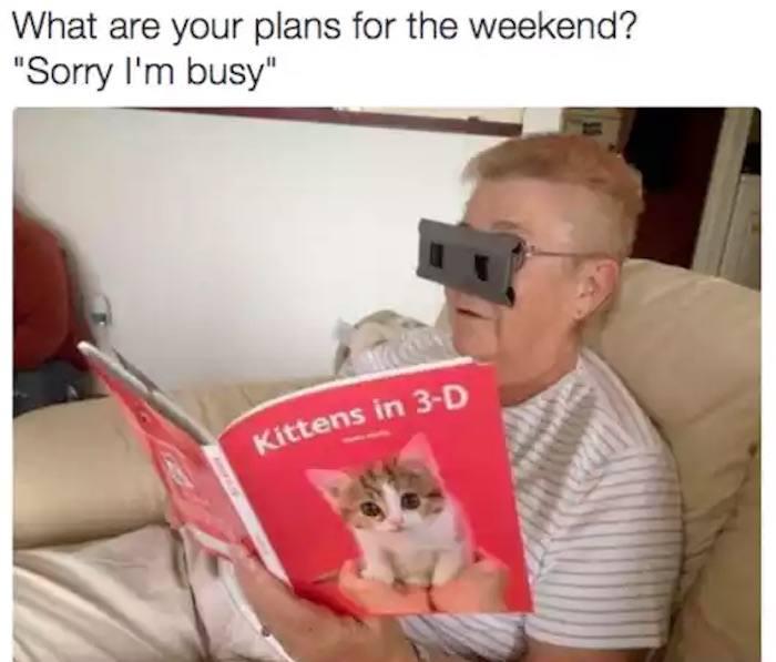 3d Kittens Funny Introvert Memes