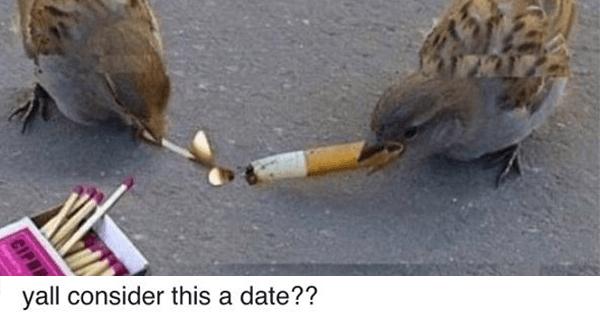Bird Match