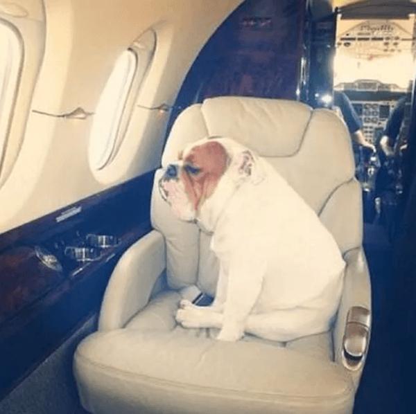 Dog On Jet