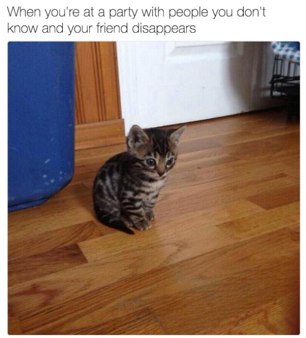 Friend At Party Introvert Memes