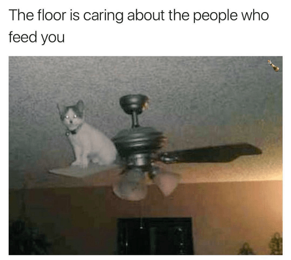 Funny The Floor Is Lava Memes