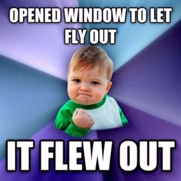 True Success Kid Memes Fly