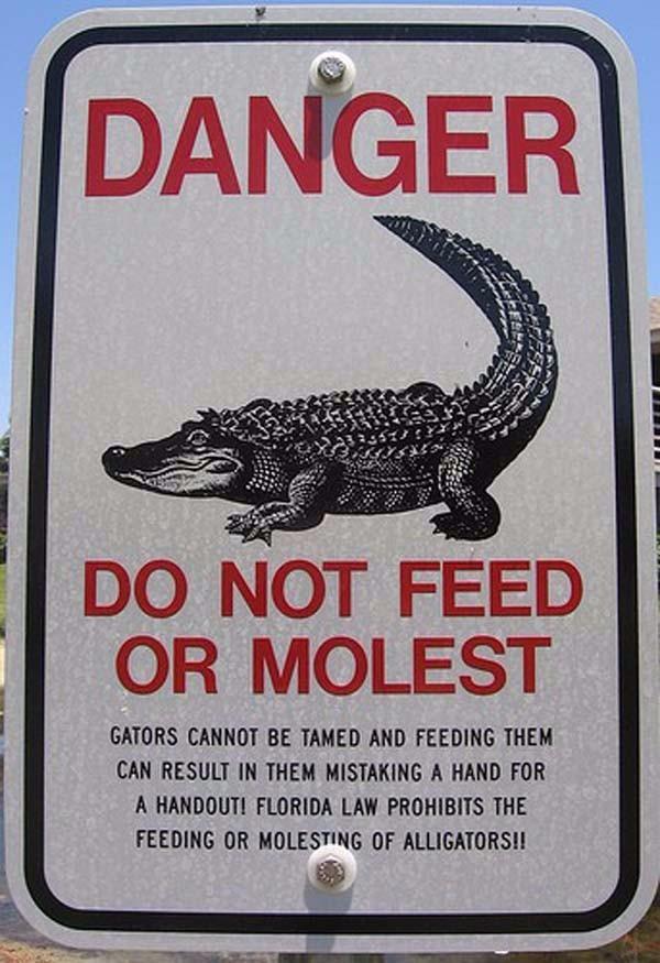 Gator Molest
