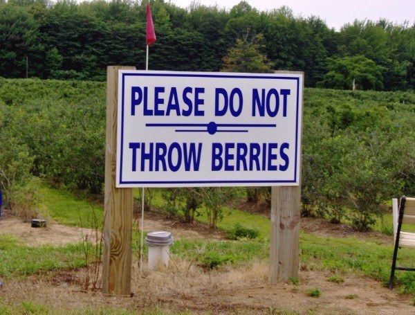 Throw Berries