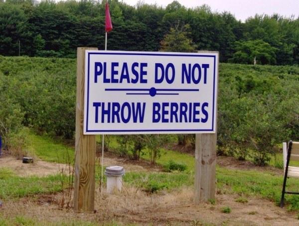 Throw Berries