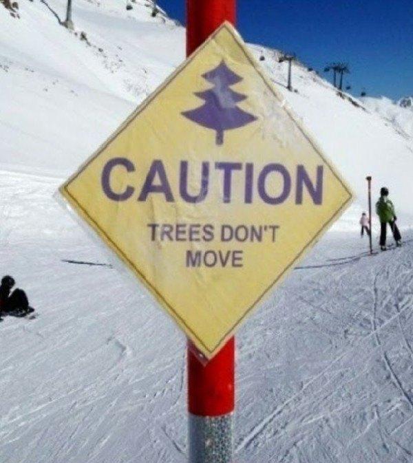 Trees Move