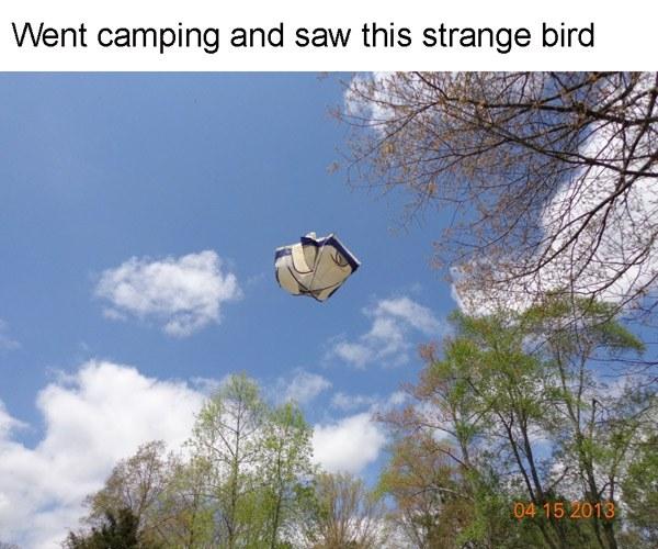 Bird Tent