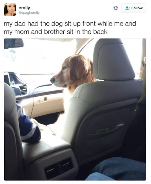 Dog Front