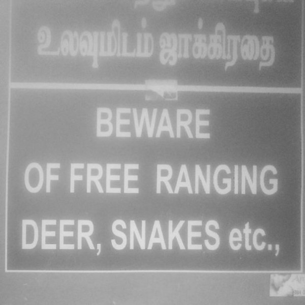 Free Range Snakes