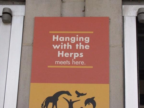 Hanging Herps