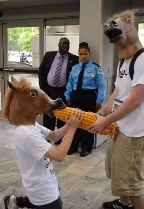 Horse Corn
