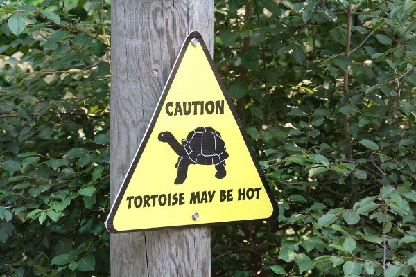 Hot Tortoise