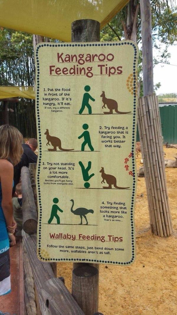 Kanagroo Feeding