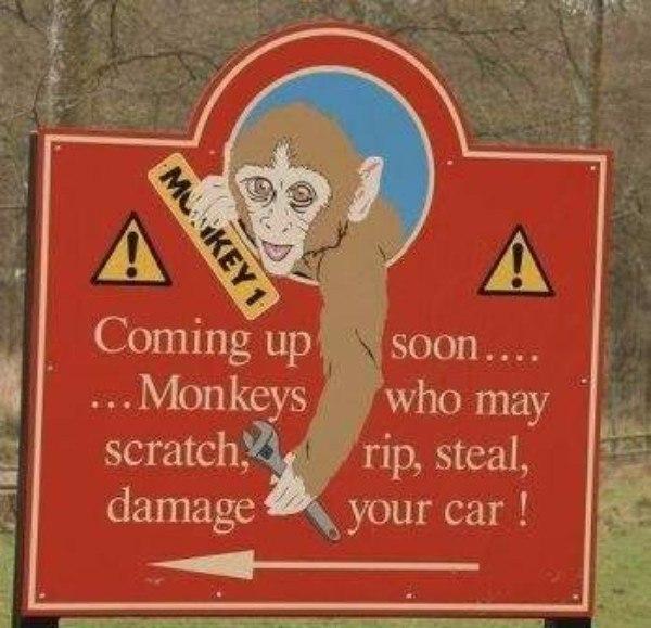 Monkey Cars