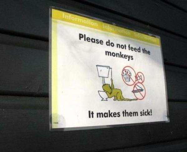 Monkeys Toilet