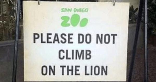 No Lion