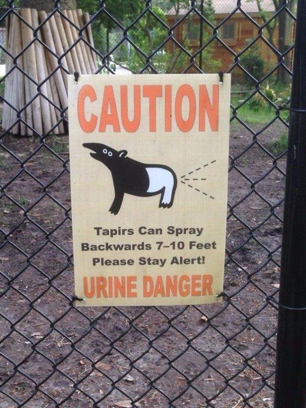 Tapir Urine