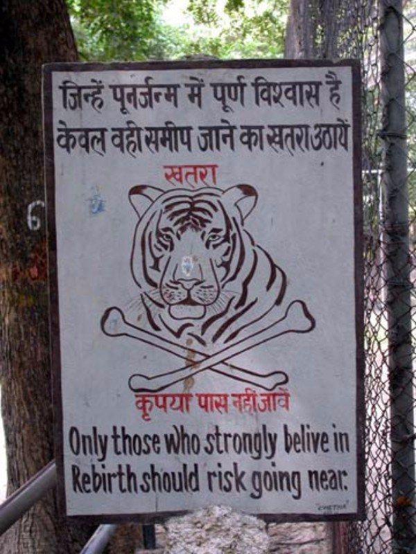 Tiger Rebirth