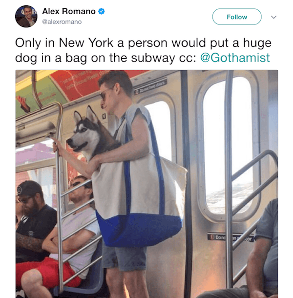 New York Tweets Dog In Bag