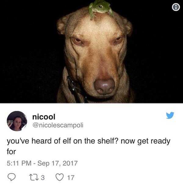 Frog On Dog