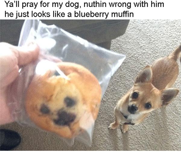Muffin Dog